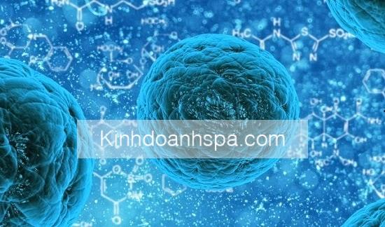 stem-cell-163711_1280-764x375